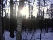 Słońce prześlizgujące się przez drzewa
