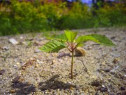 Młode drzewko w pierwszych promieniach Słońca tej wiosny