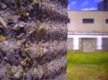 Zieleń kontra beton