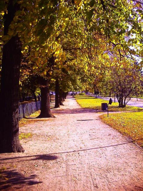 Żółty, jesienny Wrocław