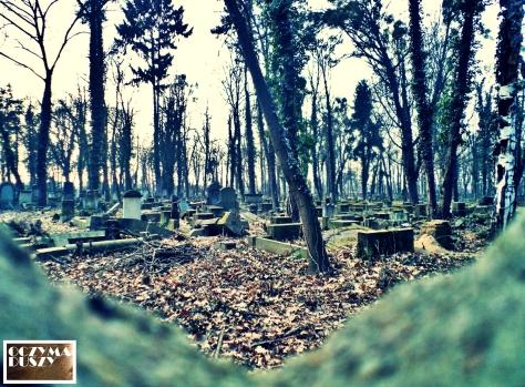 Zniszczone groby