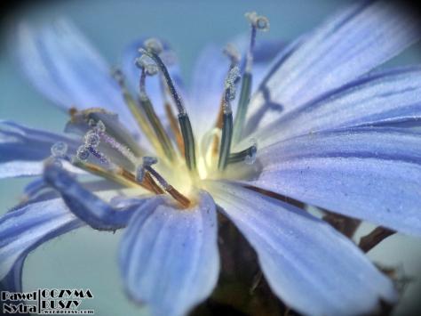 Pyłek