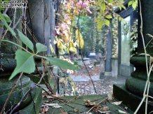 Stary Cmentarz Żydowski, Wrocław (26)