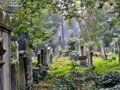 Stary Cmentarz Żydowski, Wrocław (9)