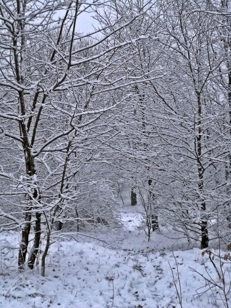 Śnieg! (1/6)