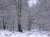 Śnieg (2)