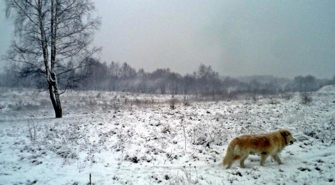 Śnieg!