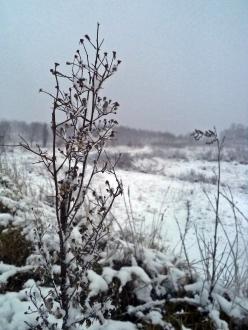 Śnieg (7)