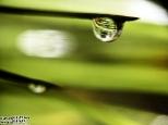 Świat w kropli deszczu