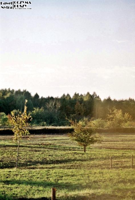 Łąka (4)