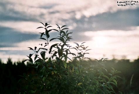 Łąka (5)