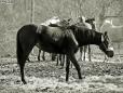 Konie (7)