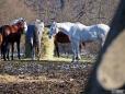 Konie (8)