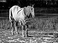 Konie (9)