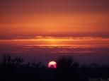 Słońce wygląda jakby wstawało nad sawanną, a nie nad zziębniętym Wrocławiem.