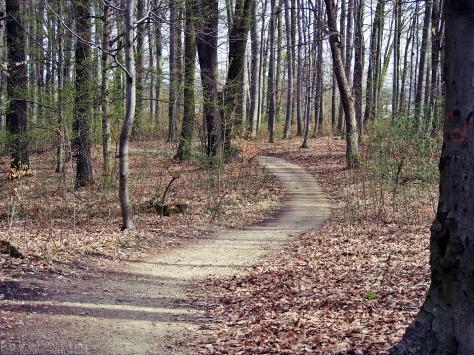 Ścieżka w Lesie Bukowym