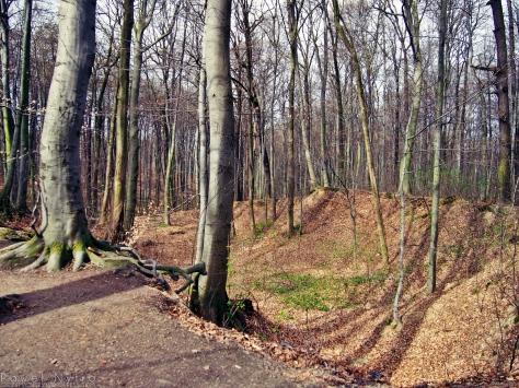 Las Bukowy obfituje w takie skarpy i wzniesienia.