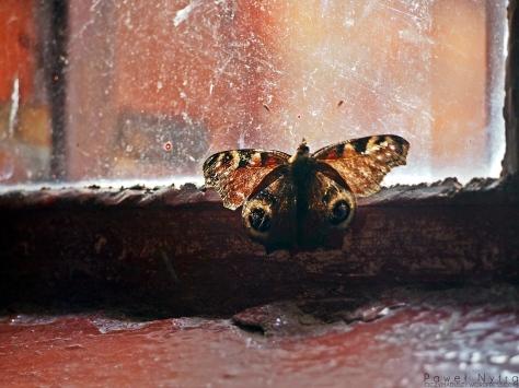 Motyl uwięziony w Kościele
