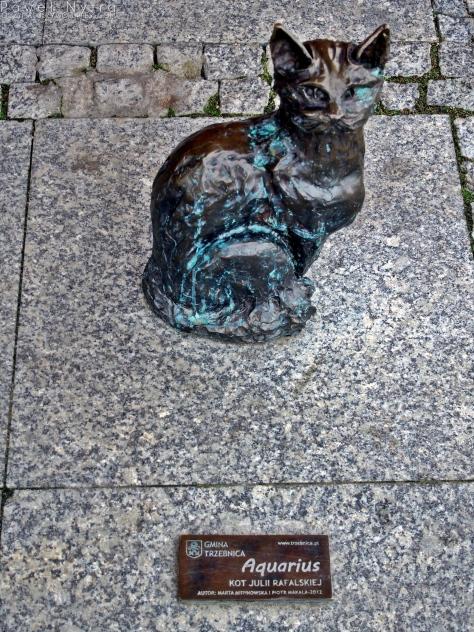Aquarius - Kot Julii Rafalskiej