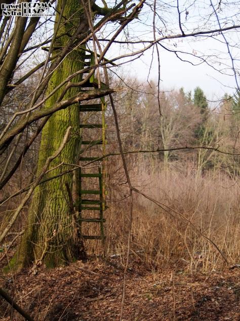 Ambona na obrzeżach lasu.