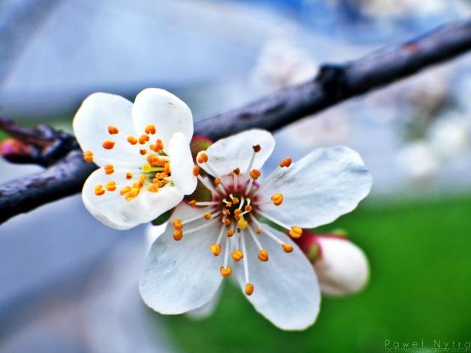 Kwiecień-plecień…