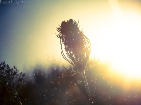 Bokeh w kwiatki
