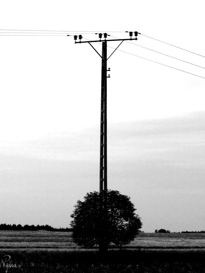 Drzewo pod prądem