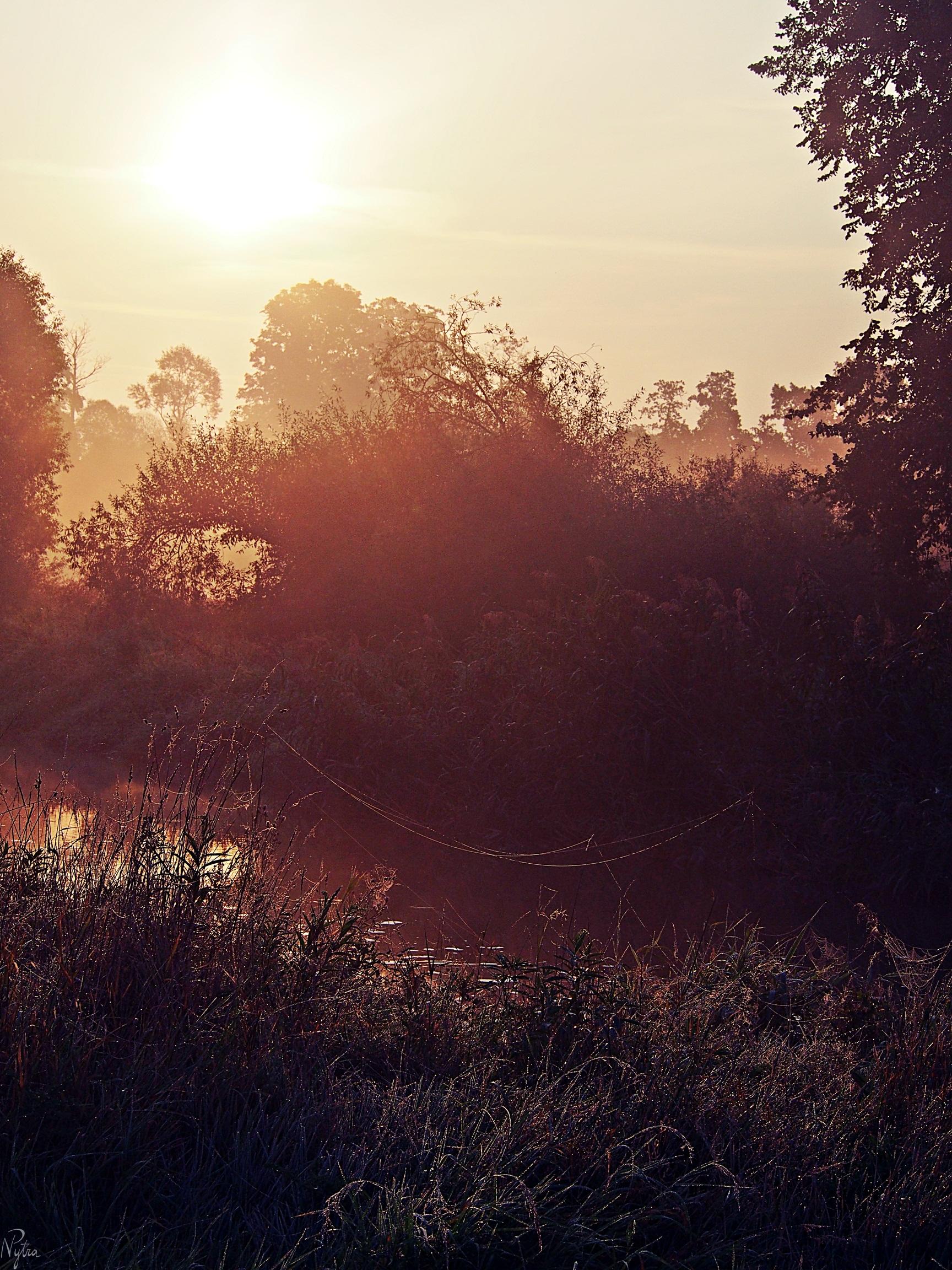 Rzeka Bystrzyca o wschodzie słońca.
