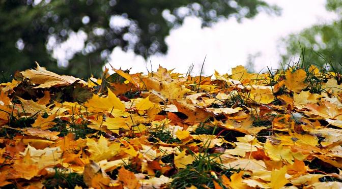 Jesiennych akcentów ciąg dalszy.