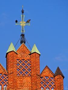 Dwie wrony siwe (Corvus corone) na krzyżu kościoła parafialnego pw. Bożego Ciała