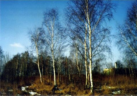 Drzewa zimą w Miękini. W tle widać miejscową szkołę, do której wtedy chodziłem.